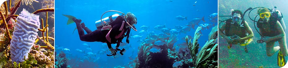 Paya Bay Resort - Roatan, Honduras : A Personalized Scuba Diving Experience