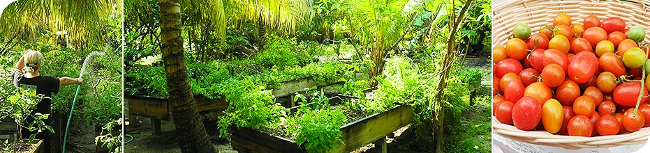 Paya Bay Resort - Roatan, Honduras : Our Green and Organic Efforts